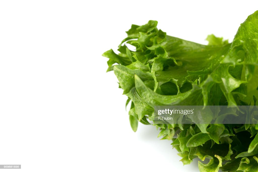 Green fresh lettuce salad texture close up shot on white background : Stock-Foto
