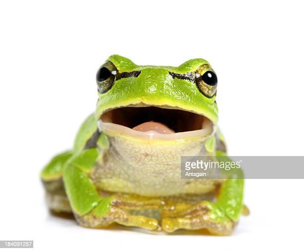 Grünen Frosch
