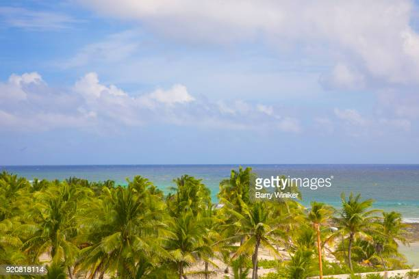 Green fronds on palm trees at beach near blue waters of Caribbean off Mexico