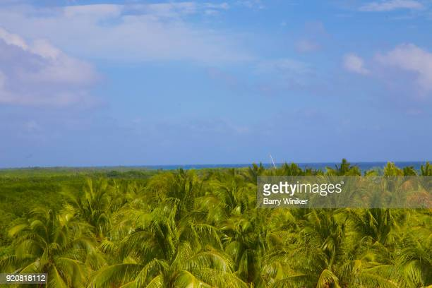 Green fronds on palm trees below blue waters of Caribbean off Mexico