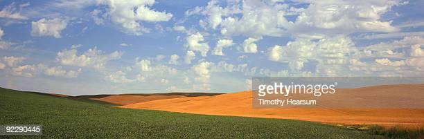 green garbanzo bean and golden grain fields - timothy hearsum fotografías e imágenes de stock