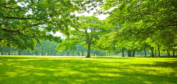 green garden 1131805687
