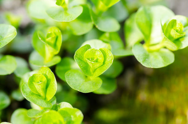 Free garden background Images, Pictures, and Royalty-Free Stock ...
