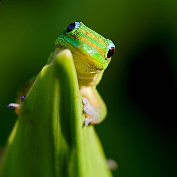 Green Gecko Wall Art