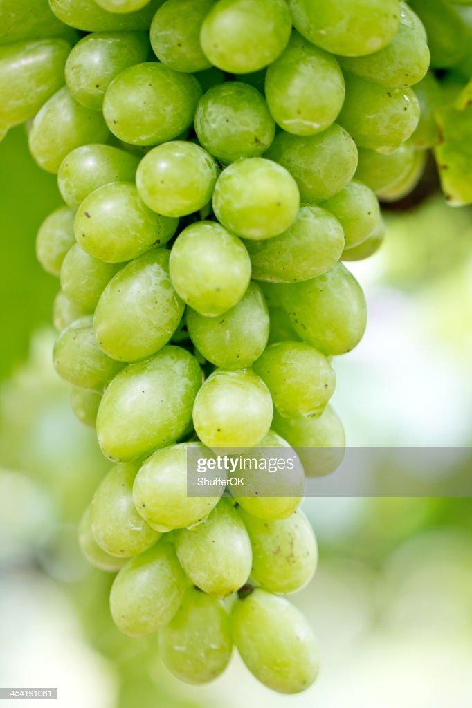 Uva verde : Foto de stock
