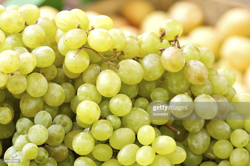 Green grapes on vine : Stock Photo