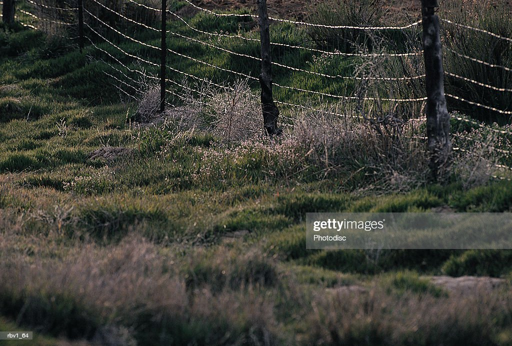 green grass and dead plants line the edges of a barbed wire fence supported by wood fence posts : Foto de stock