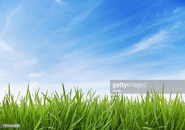 green grass and sky xxxl 70 mpx - grass stock pictures, royalty-free photos & images