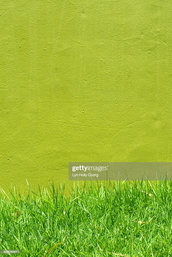 Green grass and wall : Stock Photo