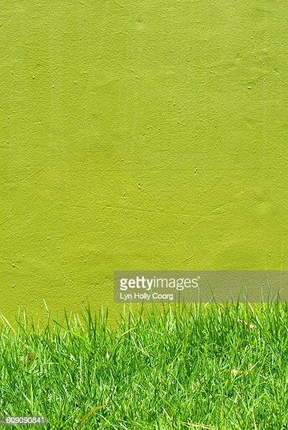 green grass and wall - lyn holly coorg stock pictures, royalty-free photos & images