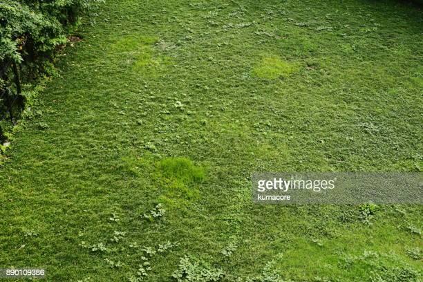 Green grass area
