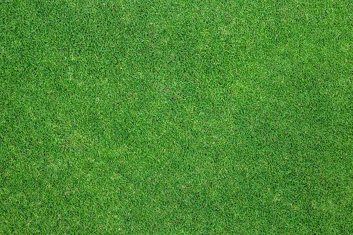Green grass background. background texture. 1127248193