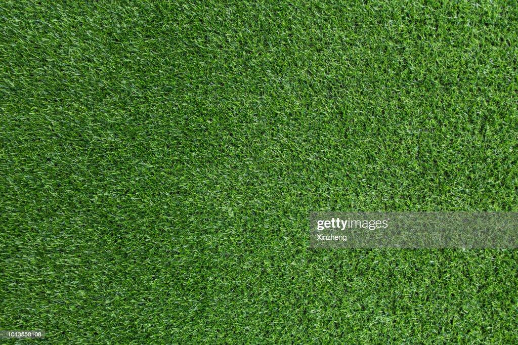 Green grass background : Stock Photo