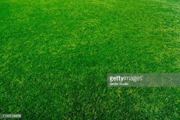 green grass background - campo de rúgbi - fotografias e filmes do acervo