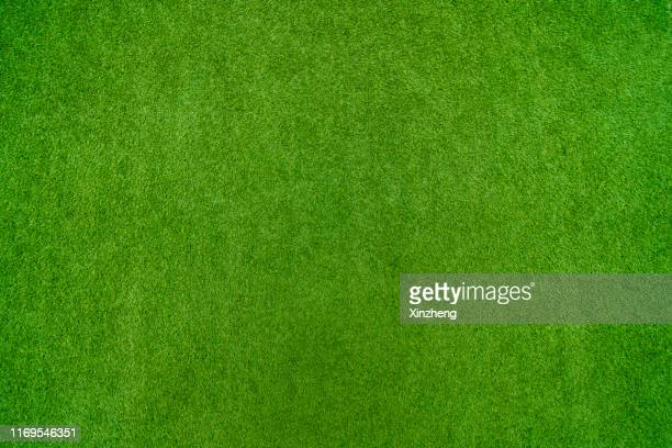 green grass background - lawn stock pictures, royalty-free photos & images