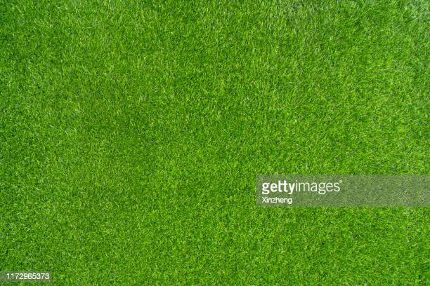 green grass background - erba foto e immagini stock
