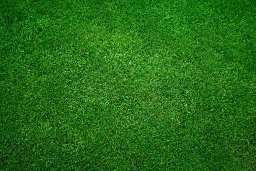 Green grass background 171309616