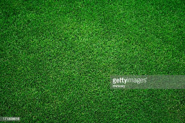 Sfondo verde erba