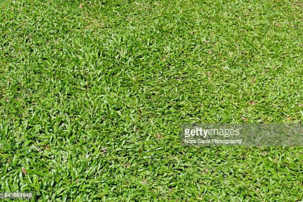 green grass background - rugby pitch stock pictures, royalty-free photos & images