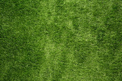Green grass background 859382322