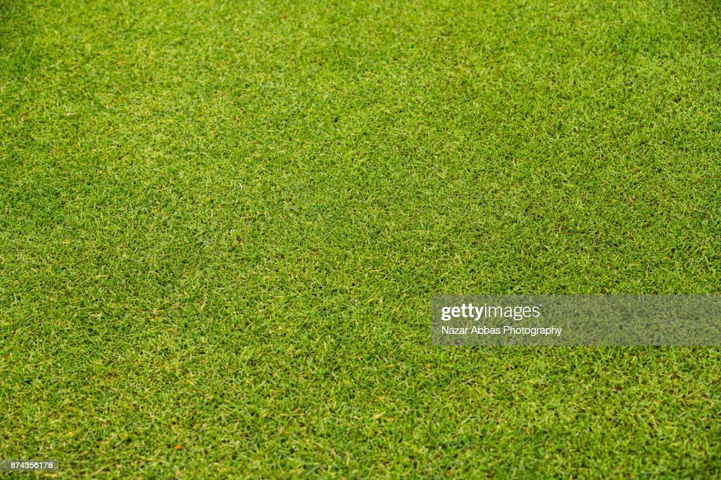 Green Grass Background. : Stock Photo