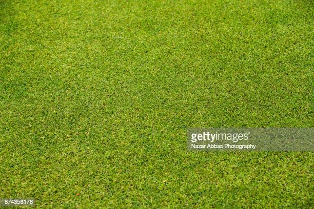 green grass background. - pelouse photos et images de collection