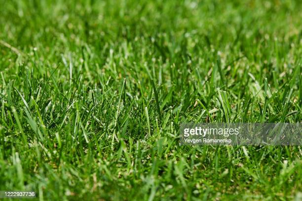 green grass background texture - lawn stock pictures, royalty-free photos & images