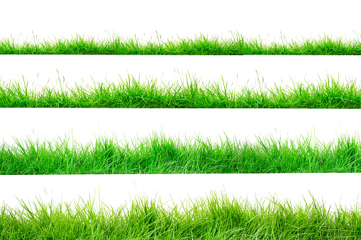 Green Grass Border isolated on white background.The collection of grass.(Manila Grass)The grass is native to Thailand is very popular in the front yard. 1057071408