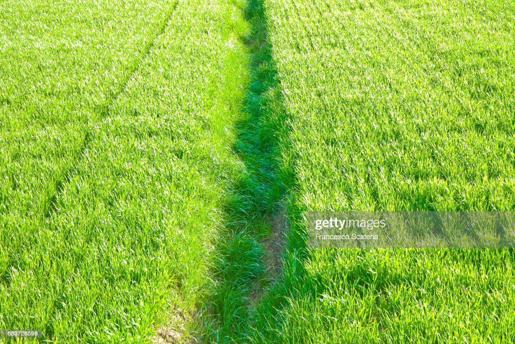 grass field from above. Green Grass Field Backgrounds Seen From Above - Image Whit Copy Space :  Stock Photo R