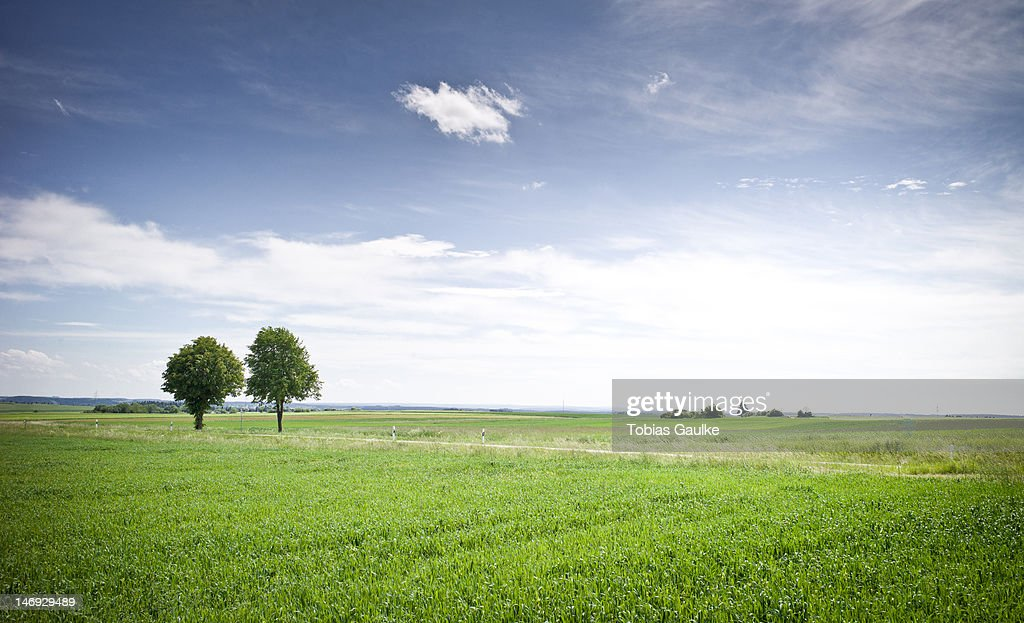 Green grass field : Stock-Foto