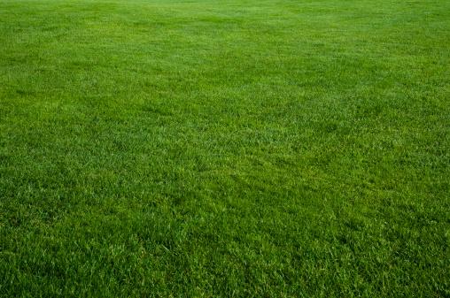Green grass field 182361617