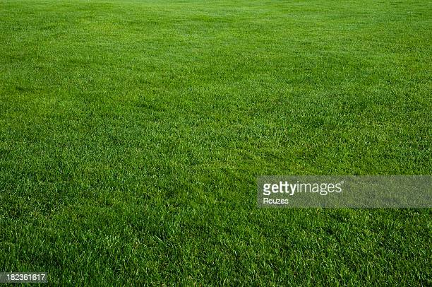 green grass field - grass stock pictures, royalty-free photos & images
