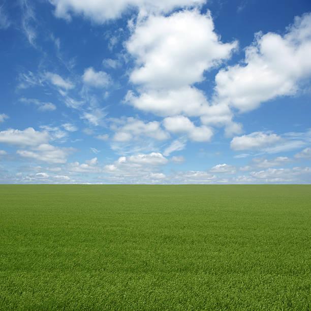 XXL Green Grass Field Wall Art
