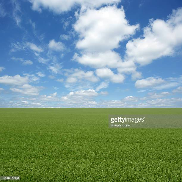 xxl green grass field - great plains stock pictures, royalty-free photos & images