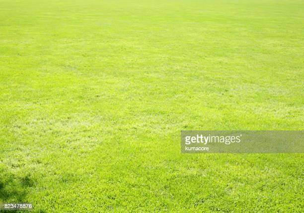 green grass field - 芝草 ストックフォトと画像