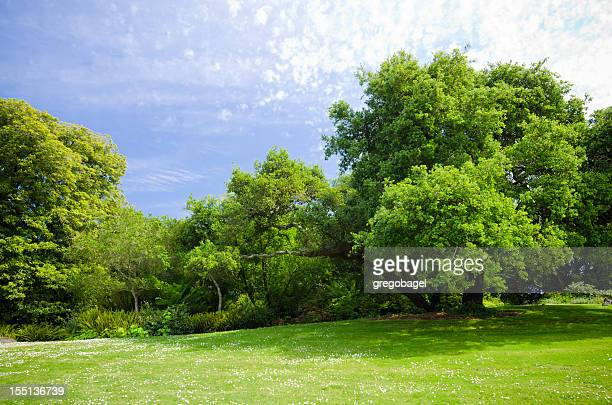 Green grass field with lush foliage and trees