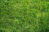 Green grass flat lay background