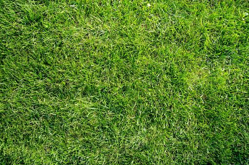 Green grass flat lay background 1133593766