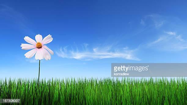 Grünen Gras und blauer Himmel mit Blumen
