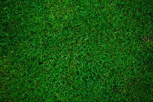 green grass football pitch 537211737