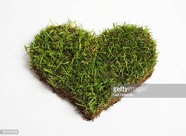 green grass heart - gras stock pictures, royalty-free photos & images