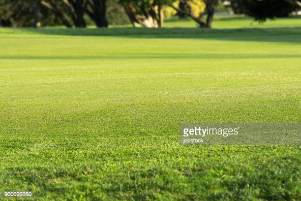 Green grass in a golf course