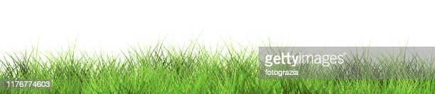 green grass isolated on white background - gras stock pictures, royalty-free photos & images