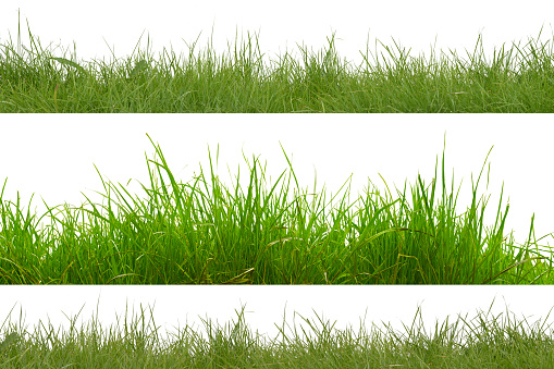 green grass isolated on white background. 637357262