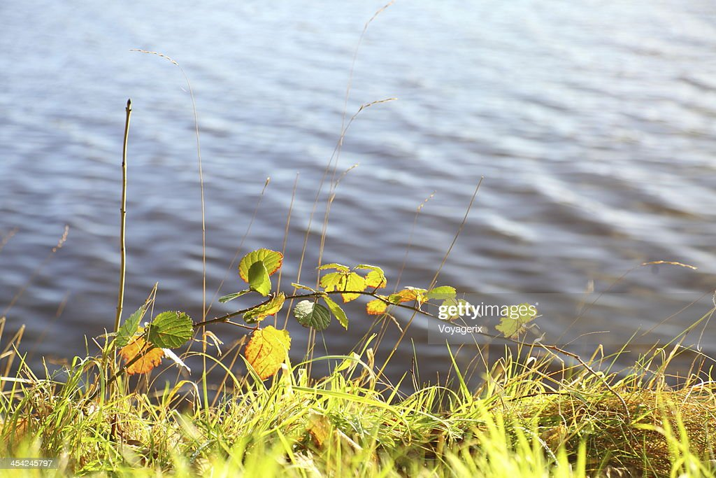 Green grass near the river : Stock Photo