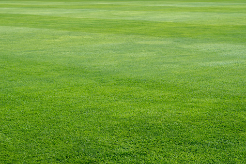 green grass on playing field background 953281916