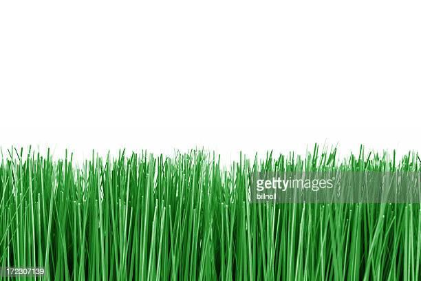 Grüne Gras auf weißem Hintergrund