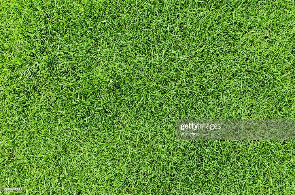 green grass pattern : Stock Photo