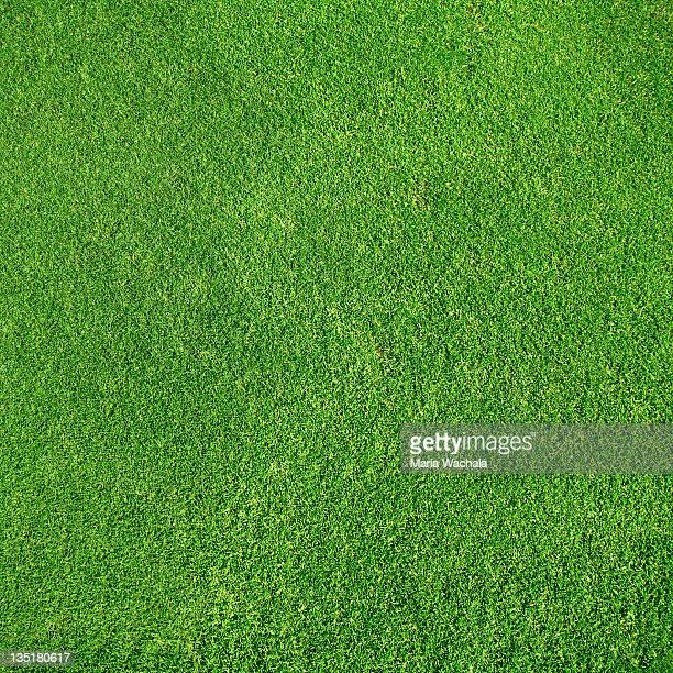 green grass - grass stock pictures, royalty-free photos & images