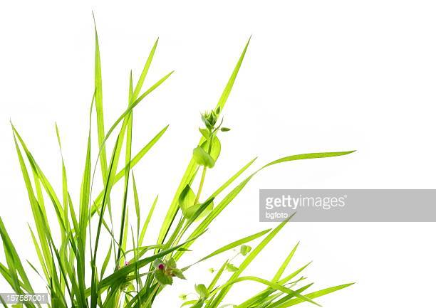 green grass - blade of grass stock pictures, royalty-free photos & images